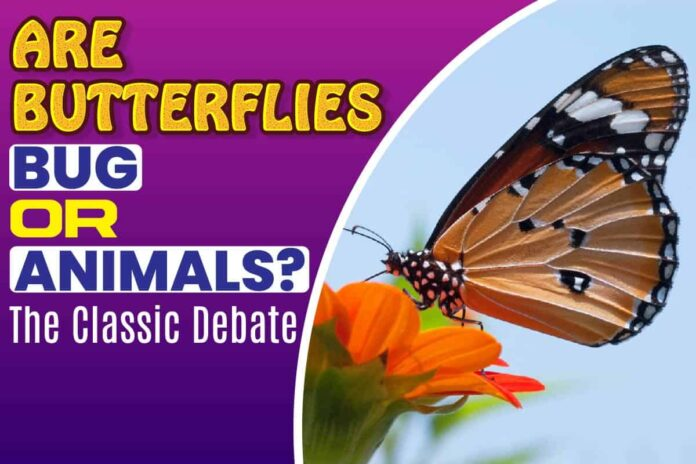 Are Butterflies Bug or Animals